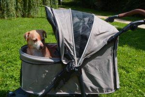 Hund im Hundebuggy